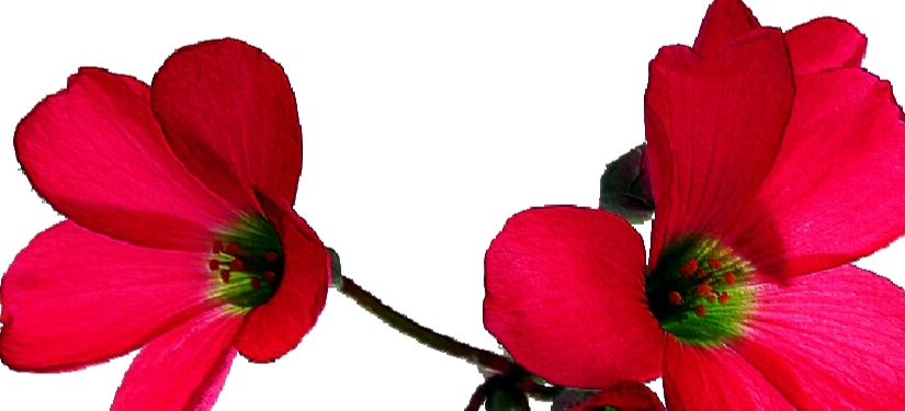 Bunga di Setiap HatiManusia