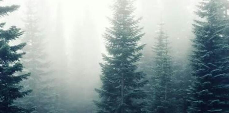 Pohon Rindu