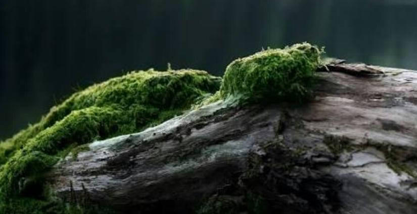 Meraba Jejak-Jejak Hutan
