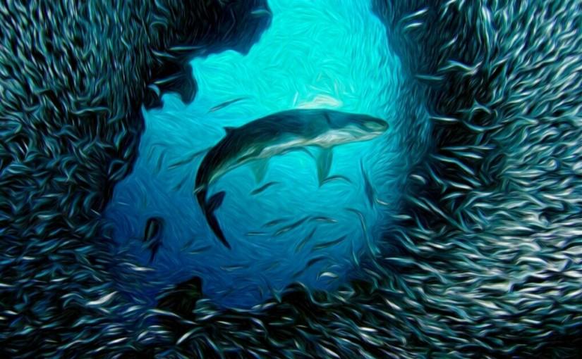 Enigma Bawah Samudera